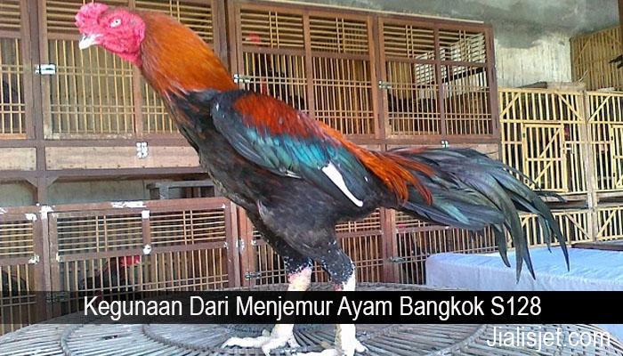 Kegunaan Dari Menjemur Ayam Bangkok S128
