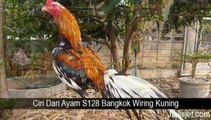 Ciri Dari Ayam S128 Bangkok Wiring Kuning