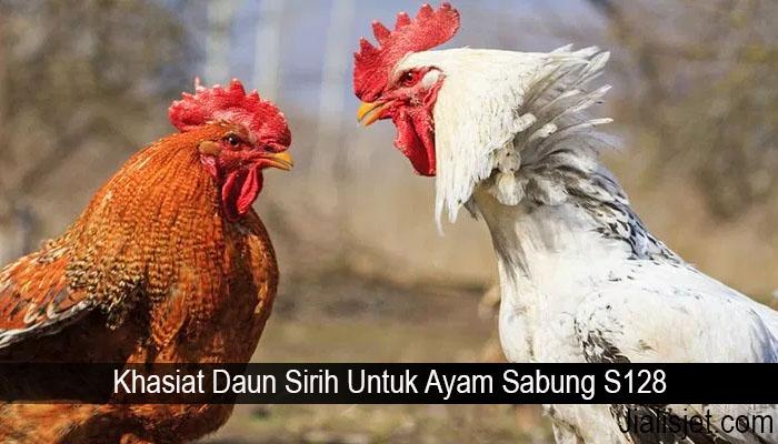 Khasiat Daun Sirih Untuk Ayam Sabung S128