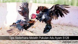 Tips Sederhana Melatih Pukulan Adu Ayam S128