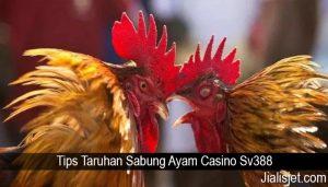 Tips Taruhan Sabung Ayam Casino Sv388